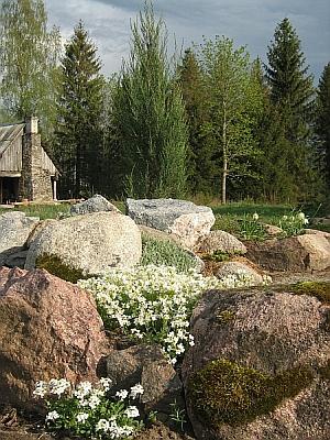 Tuula kiviktaimla 2007